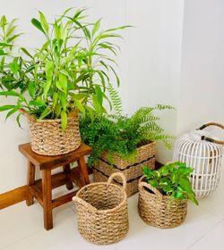 Manang.ph Round Planter Basket